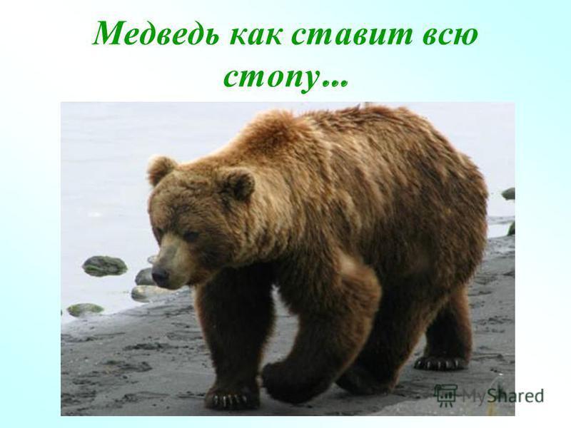 Медведь как ставит всю стопу …