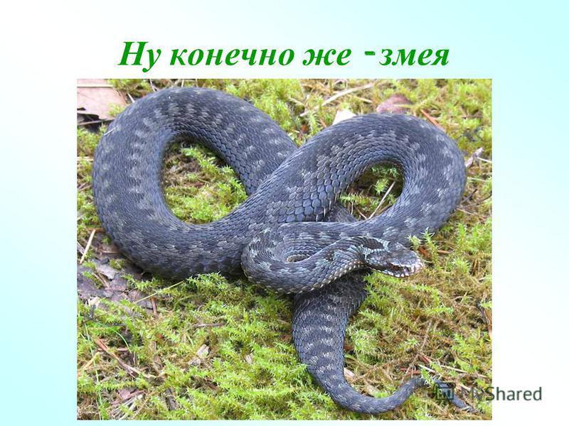 Ну конечно же - змея