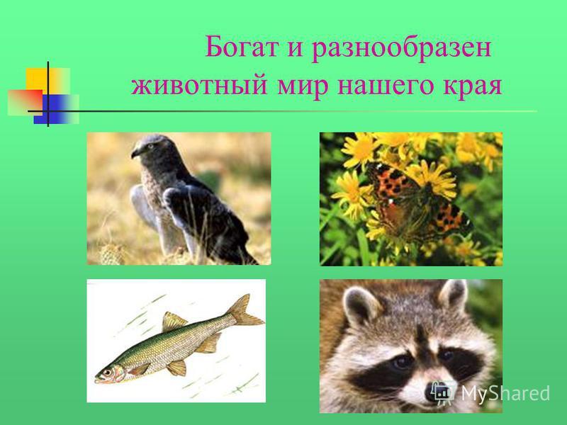 Богат и разнообразен животный мир нашего края