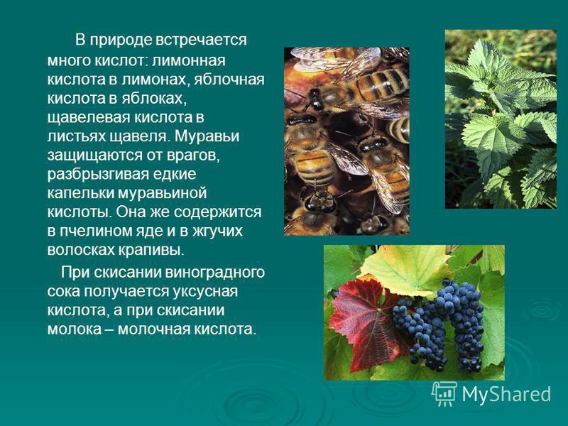 В природе встречается много кислот: лимонная кислота в лимонах, яблочная кислота в яблоках, щавелевая кислота в листьях щавеля. Муравьи защищаются от врагов, разбрызгивая едкие капельки муравьиной кислоты. Она же содержится в пчелином яде и в жгучих