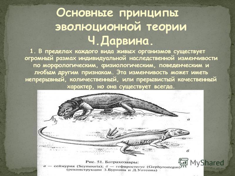 Основные принципы эволюционной теории Ч.Дарвина. 1. В пределах каждого вида живых организмов существует огромный размах индивидуальной наследственной изменчивости по морфологическим, физиологическим, поведенческим и любым другим признакам. Эта изменч
