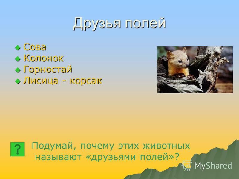 Друзья полей Сова Сова Колонок Колонок Горностай Горностай Лисица - корсак Лисица - корсак Подумай, почему этих животных называют «друзьями полей»?