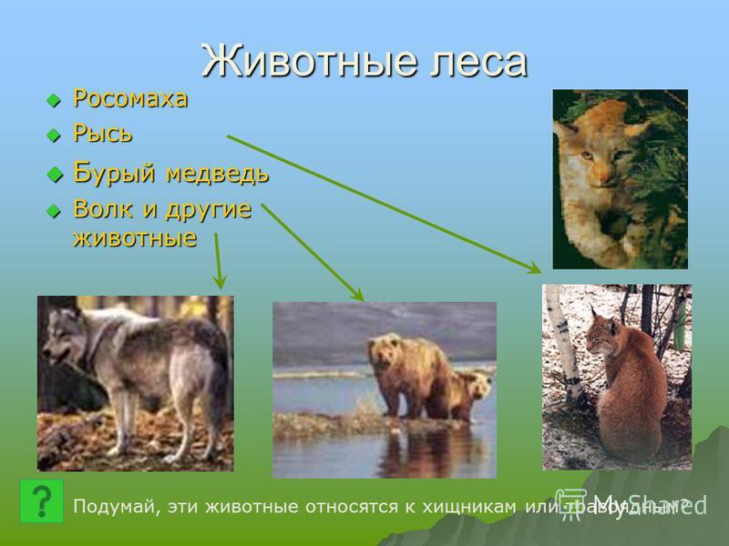Животные леса Росомаха Росомаха Рысь Рысь Б урый медведь Б урый медведь Волк и другие животные Волк и другие животные Подумай, эти животные относятся к хищникам или травоядным?