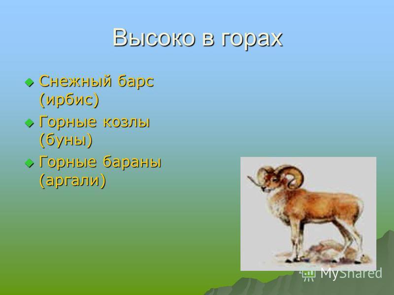 Высоко в горах Снежный барс (ирбис) Снежный барс (ирбис) Горные козлы (буны) Горные козлы (буны) Горные бараны (аргали) Горные бараны (аргали)