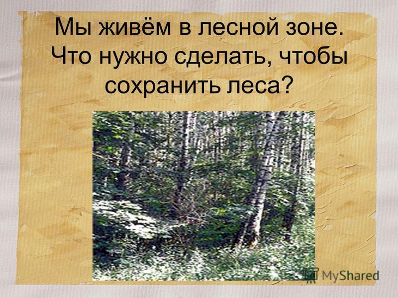Мы живём в лесной зоне. Что нужно сделать, чтобы сохранить леса?