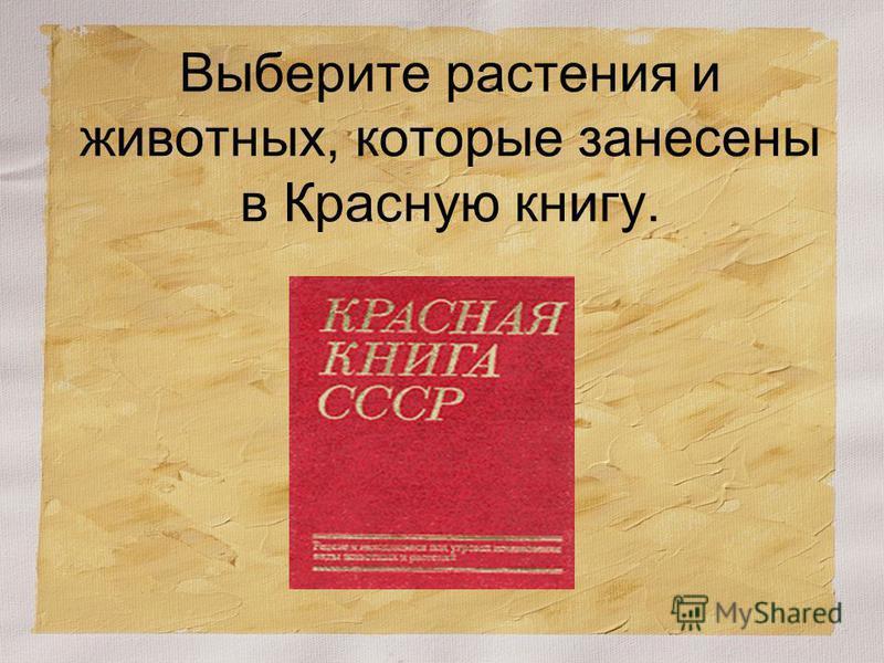 Выберите растения и животных, которые занесены в Красную книгу.