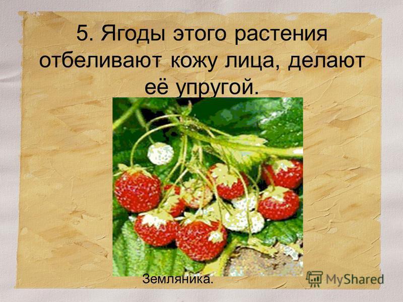 5. Ягоды этого растения отбеливают кожу лица, делают её упругой. Земляника.