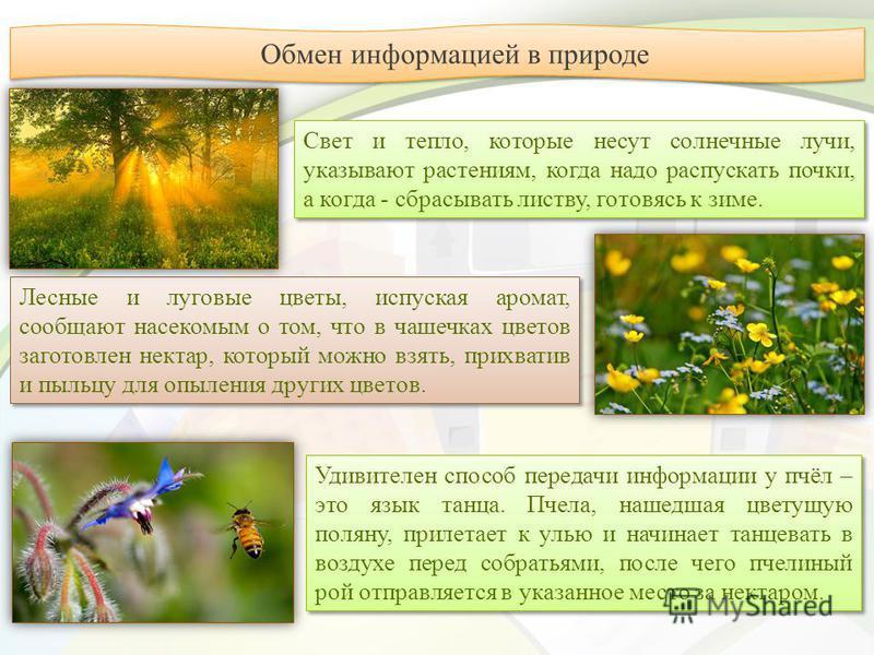 Лесные и луговые цветы, испуская аромат, сообщают насекомым о том, что в чашечках цветов заготовлен нектар, который можно взять, прихватив и пыльцу для опыления других цветов. Свет и тепло, которые несут солнечные лучи, указывают растениям, когда над