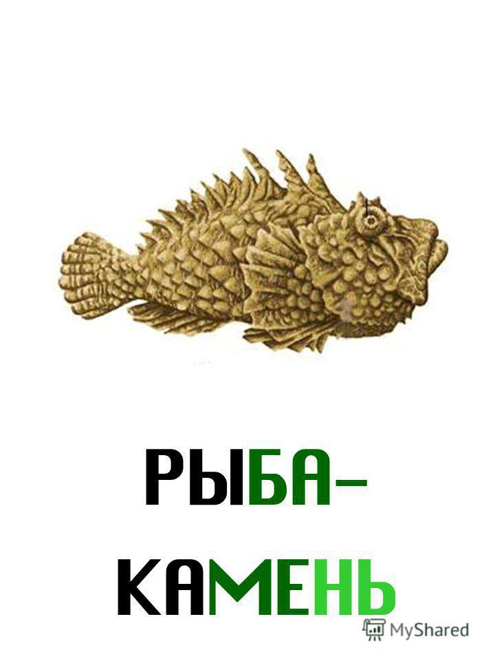 РЫБА- КАМЕНЬ