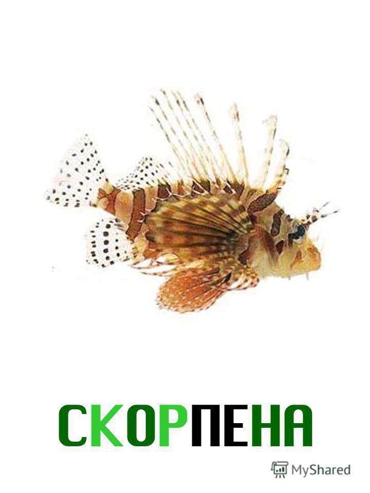 СКОРПЕНА