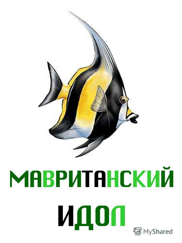 МАВРИТАНСКИЙ ИДОЛ