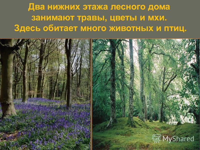 Два нижних этажа лесного дома занимают травы, цветы и мхи. Здесь обитает много животных и птиц.