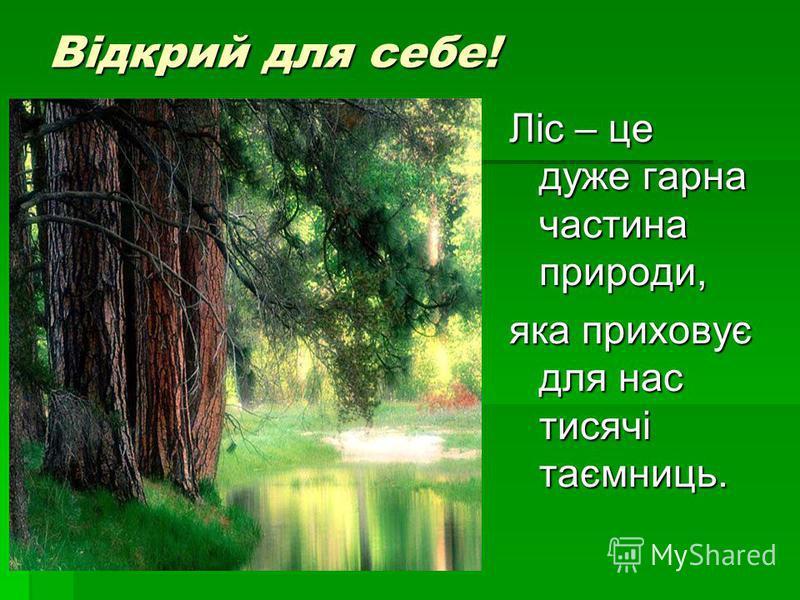 Відкрий для себе! Ліс – це дуже гарна частина природи, яка приховує для нас тисячі таємниць.