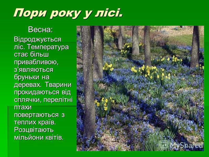 Пори року у лісі. Весна: Відроджується ліс. Температура стає більш привабливою, зявляються бруньки на деревах. Тварини прокидаються від сплячки, перелітні птахи повертаються з теплих країв. Розцвітають мільйони квітів. Відроджується ліс. Температура