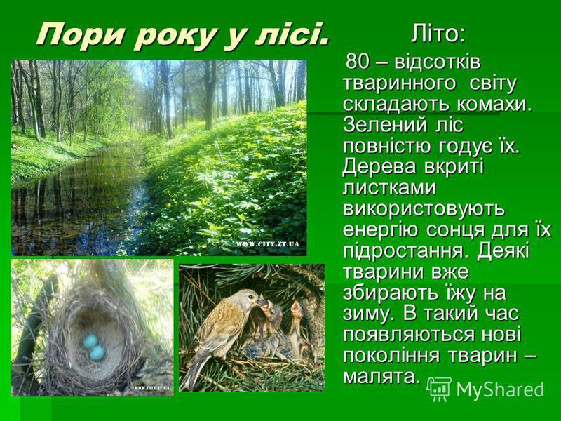 Пори року у лісі. Літо: 80 – відсотків тваринного світу складають комахи. Зелений ліс повністю годує їх. Дерева вкриті листками використовують енергію сонця для їх підростання. Деякі тварини вже збирають їжу на зиму. В такий час появляються нові поко