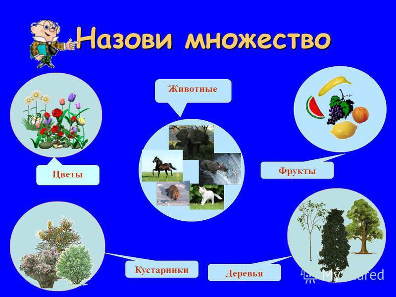 Назови множество Цветы Кустарники Деревья Фрукты Животные