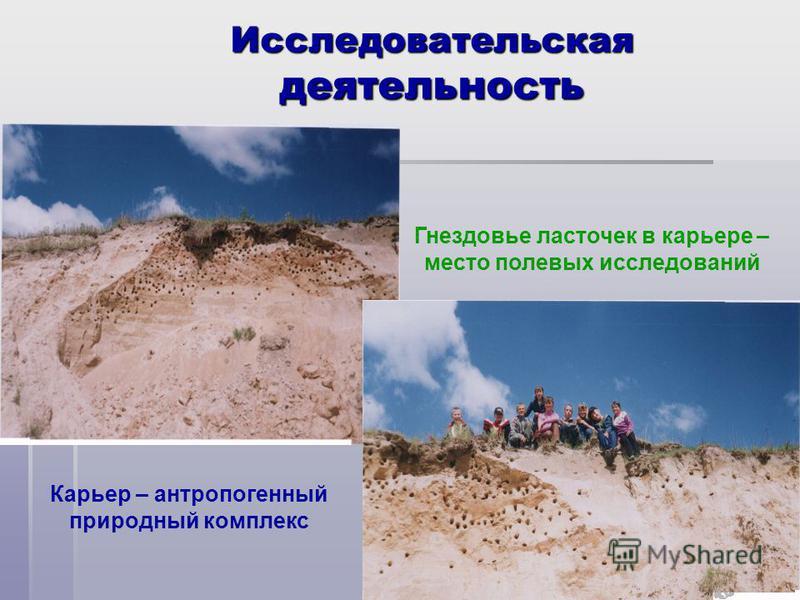 Исследовательская деятельность Карьер – антропогенный природный комплекс Гнездовье ласточек в карьере – место полевых исследований