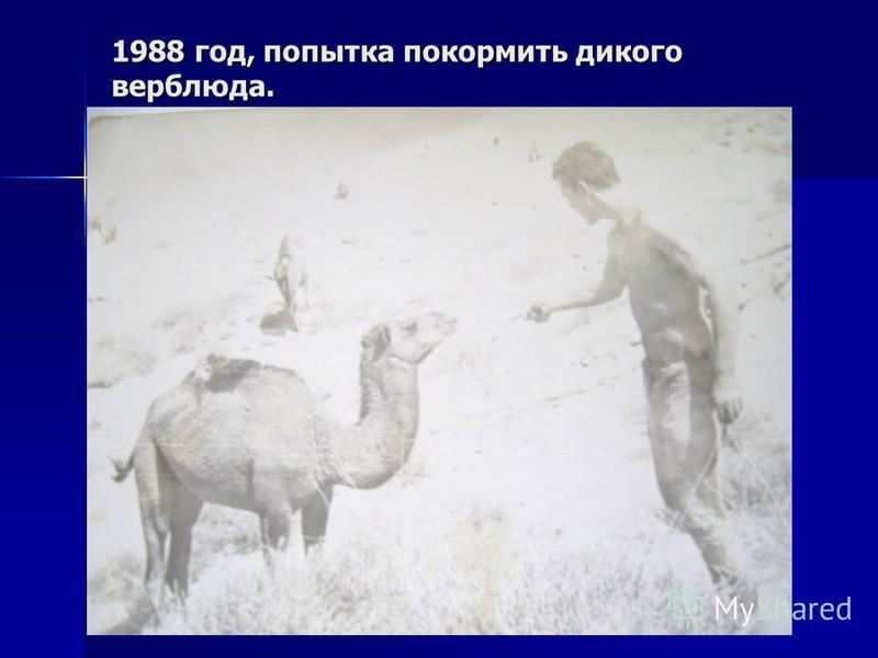 1988 год, попытка покормить дикого верблюда.