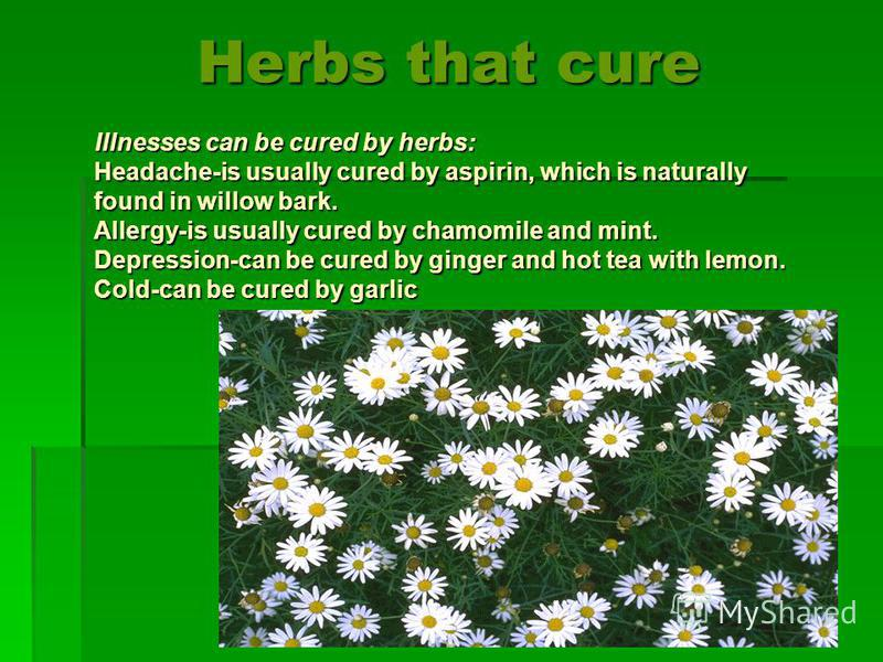 Herbs that cure Illnesses can be cured by herbs: Headache-is usually cured by aspirin, which is naturally found in willow bark. Allergy-is usually cured by chamomile and mint. Depression-can be cured by ginger and hot tea with lemon. Cold-can be cure