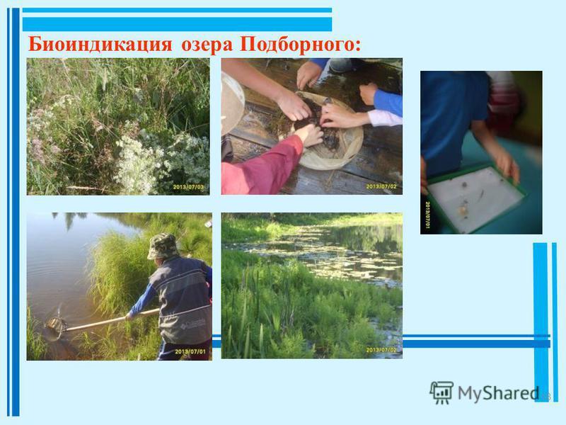 18 Биоиндикация озера Подборного: