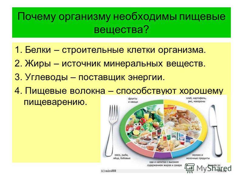 Почему организму необходимы пищевые вещества? 1. Белки – строительные клетки организма. 2. Жиры – источник минеральных веществ. 3. Углеводы – поставщик энергии. 4. Пищевые волокна – способствуют хорошему пищеварению.