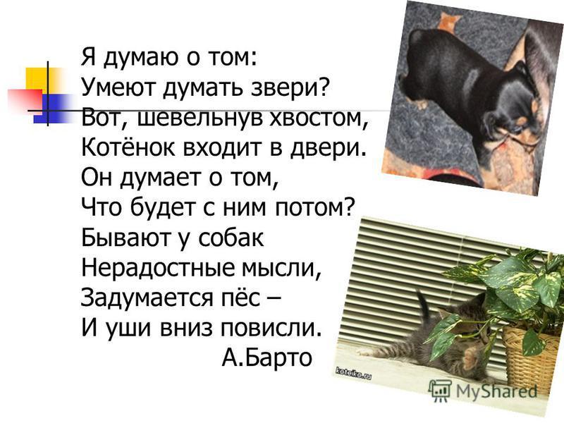 Я думаю о том: Умеют думать звери? Вот, шевельнув хвостом, Котёнок входит в двери. Он думает о том, Что будет с ним потом? Бывают у собак Нерадостные мысли, Задумается пёс – И уши вниз повисли. А.Барто