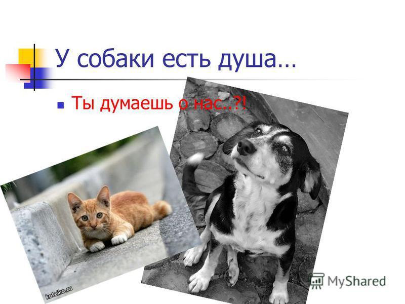 У собаки есть душа… Ты думаешь о нас..?!
