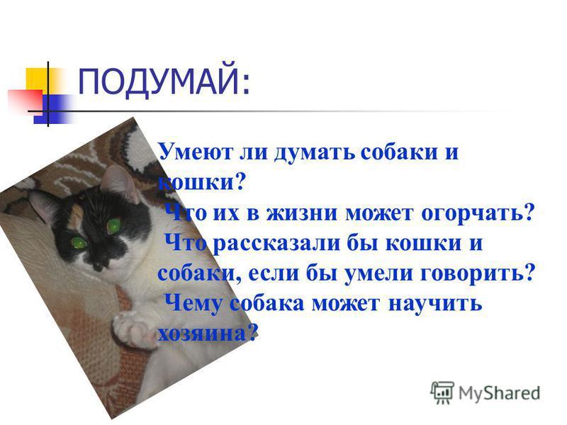 ПОДУМАЙ: Умеют ли думать собаки и кошки? Что их в жизни может огорчать? Что рассказали бы кошки и собаки, если бы умели говорить? Чему собака может научить хозяина?
