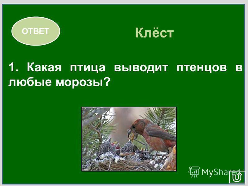 МИР ЖИВОЙ ПРИРОДЫ 1.1. 2. 3. 4.