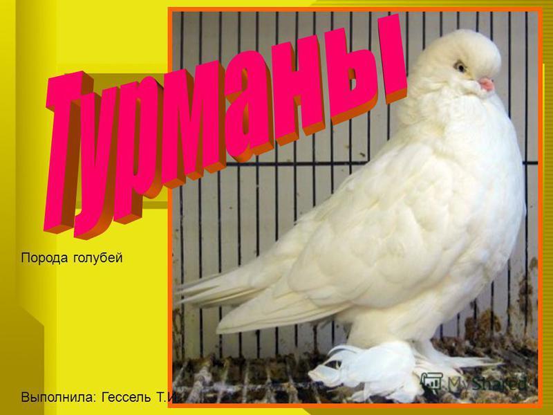 Порода голубей Выполнила: Гессель Т.И.