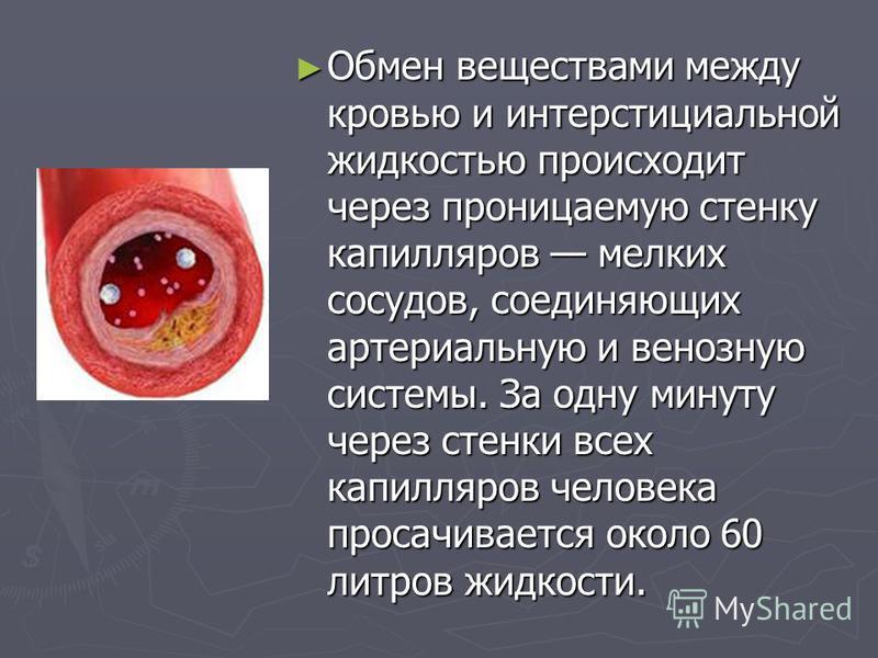Обмен веществами между кровью и интерстициальной жидкостью происходит через проницаемую стенку капилляров мелких сосудов, соединяющих артериальную и венозную системы. За одну минуту через стенки всех капилляров человека просачивается около 60 литров