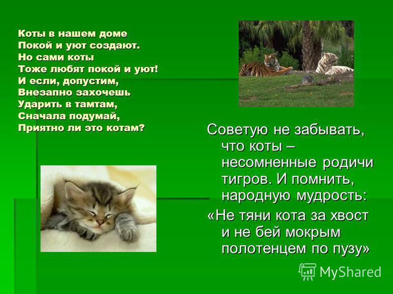 Коты в нашем доме Покой и уют создают. Но сами коты Тоже любят покой и уют! И если, допустим, Внезапно захочешь Ударить в тамтам, Сначала подумай, Приятно ли это котам? Советую не забывать, что коты – несомненные родичи тигров. И помнить, народную му