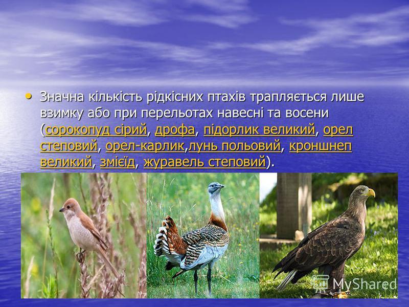 Значна кількість рідкісних птахів трапляється лише взимку або при перельотах навесні та восени (сорокопуд сірий, дрофа, підорлик великий, орел степовий, орел-карлик,лунь польовий, кроншнеп великий, змієїд, журавель степовий). Значна кількість рідкісн