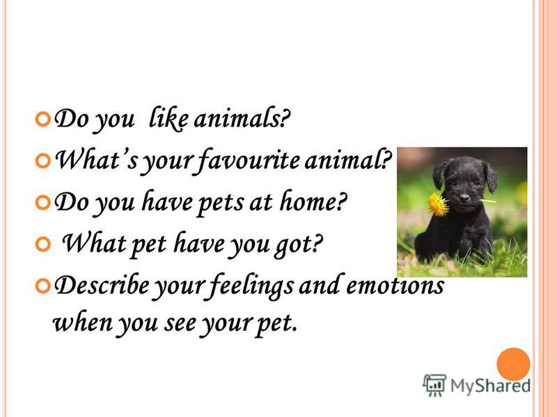 do animals have emotions Imagine, what would life be without emotions emotions are a state of consciousness that coincide with physiological changes our emotions affect mood and how we interact with our environment.