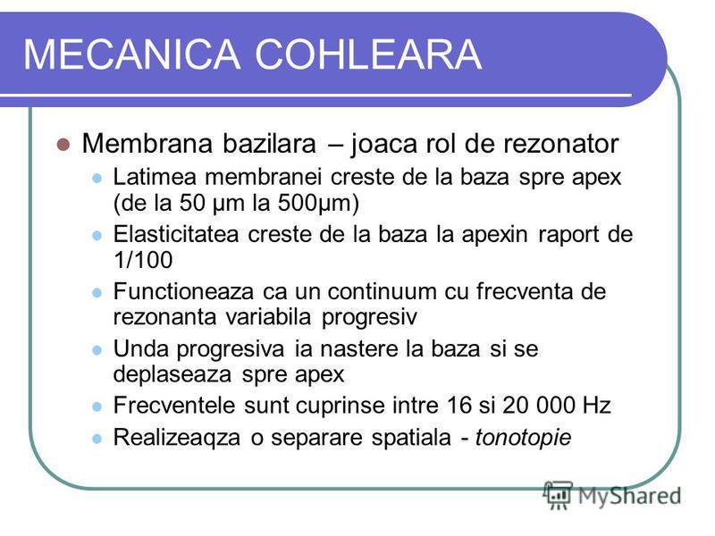 MECANICA COHLEARA Membrana bazilara – joaca rol de rezonator Latimea membranei creste de la baza spre apex (de la 50 µm la 500µm) Elasticitatea creste de la baza la apexin raport de 1/100 Functioneaza ca un continuum cu frecventa de rezonanta variabi