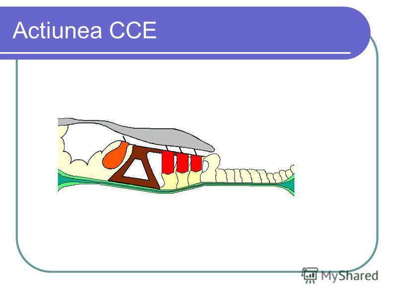 Actiunea CCE