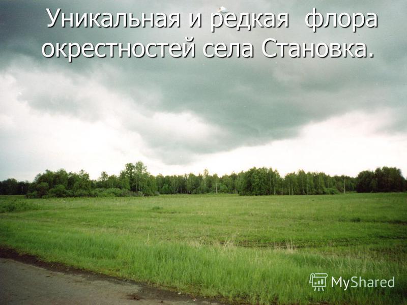 Уникальная и редкая флора окрестностей села Становка.