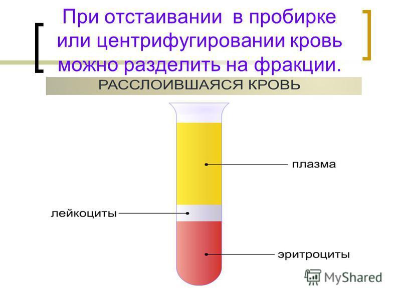 При отстаивании в пробирке или центрифугировании кровь можно разделить на фракции.