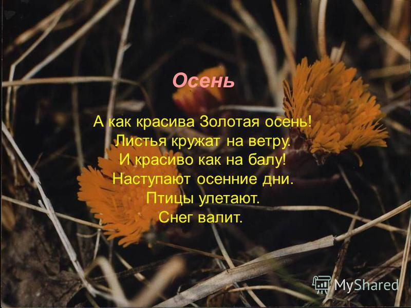 Осень А как красива Золотая осень! Листья кружат на ветру. И красиво как на балу! Наступают осенние дни. Птицы улетают. Снег валит.