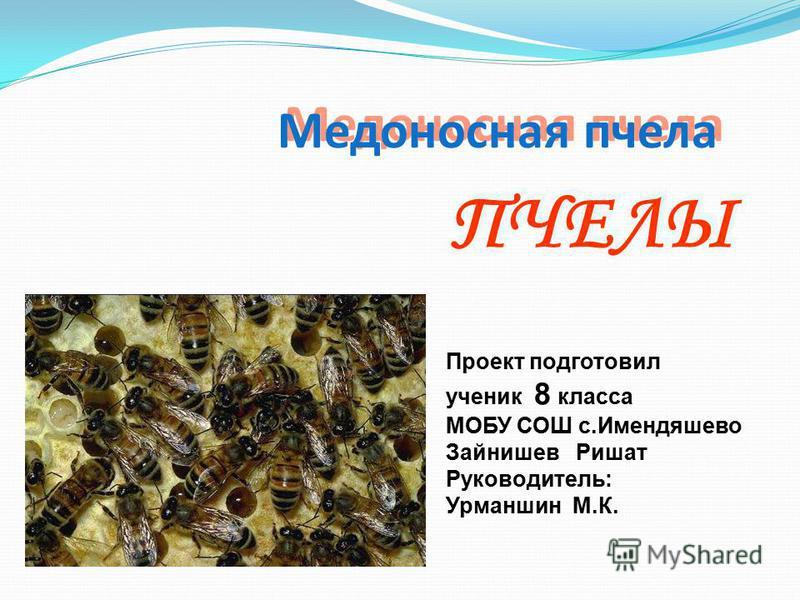 ПЧЕЛЫ Медоносная пчела Проект подготовил ученик 8 класса МОБУ СОШ с.Имендяшево Зайнишев Ришат Руководитель: Урманшин М.К.
