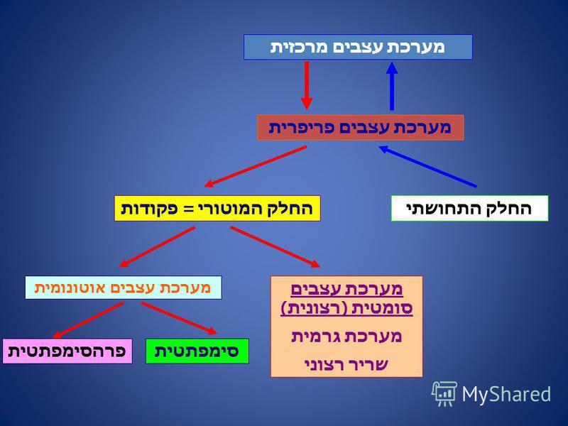 מערכת עצבים מרכזית מערכת עצבים פריפרית החלק התחושתיהחלק המוטורי = פקודות מערכת עצבים סומטית (רצונית) מערכת גרמית שריר רצוני מערכת עצבים אוטונומית סימפתטיתפרהסימפתטית