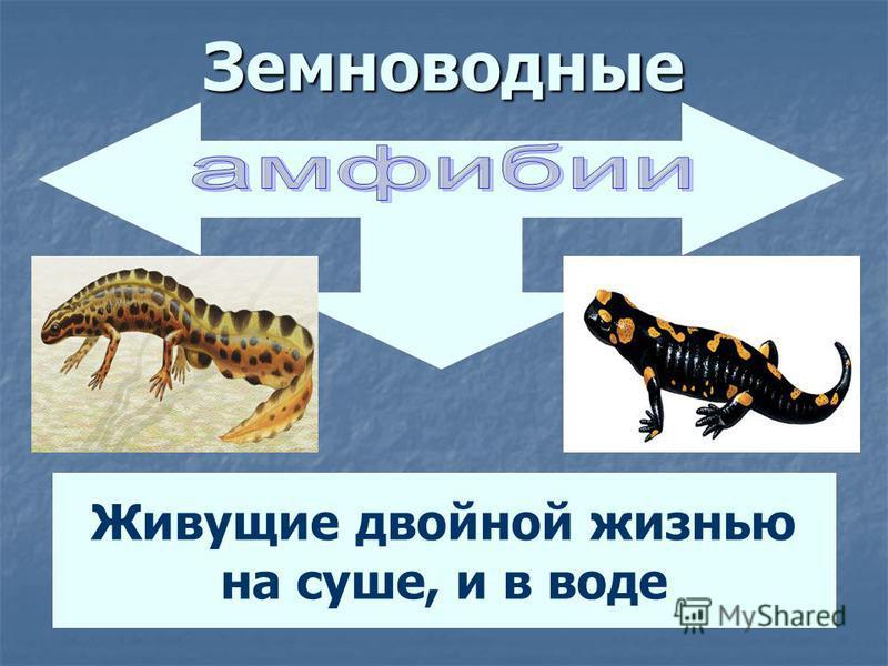 Типы рыб