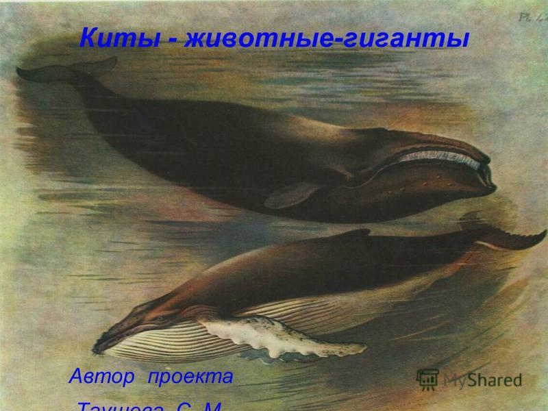 Автор проекта Таушева С. М. Киты - животные-гиганты