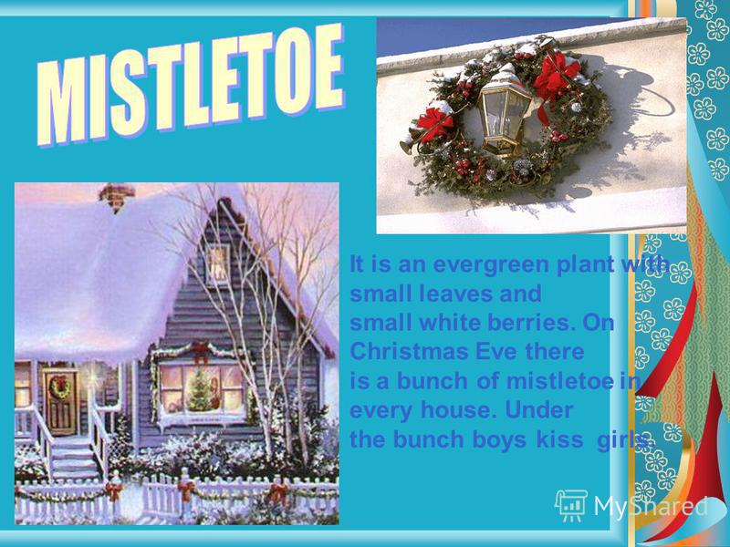It is an evergreen plant with small leaves and small white berries. On Christmas Eve there is a bunch of mistletoe in every house. Under the bunch boys kiss girls.