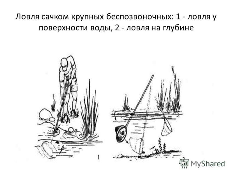 Ловля сачком крупных беспозвоночных: 1 - ловля у поверхности воды, 2 - ловля на глубине