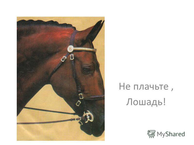 Не плачьте, Лошадь!