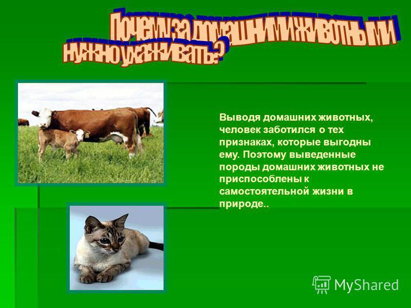 Выводя домашних животных, человек заботился о тех признаках, которые выгодны ему. Поэтому выведенные породы домашних животных не приспособлены к самостоятельной жизни в природе..
