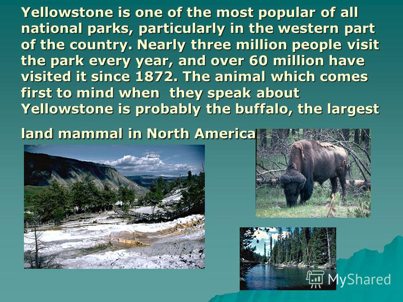 Yellowstone is one of the most popular of all national parks, particularly in the western part of the country. Nearly three million people visit the park every year, and over 60 million have visited it since 1872. The animal which comes first to mind