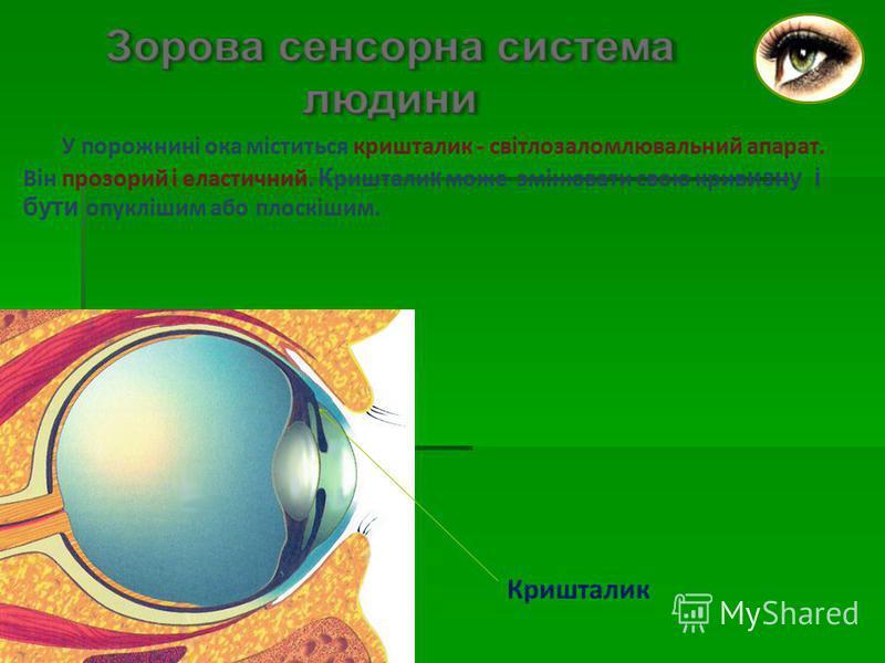 У порожнині ока міститься кришталик - світлозаломлювальний апарат. Він прозорий і еластичний. К риштали к може змінювати свою крив изну і бути опуклішим або плоскішим. Кришталик