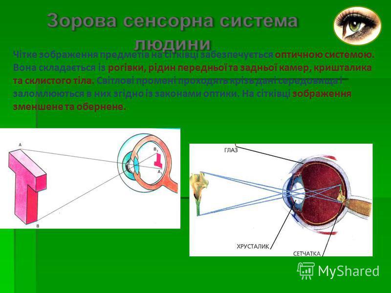 Чітке зображення предметів на сітківці забезпечується оптичною системою. Вона складається із рогівки, рідин передньої та задньої камер, кришталика та склистого тіла. Світлові промені проходять крізь дані середовища і заломлюються в них згідно із зако